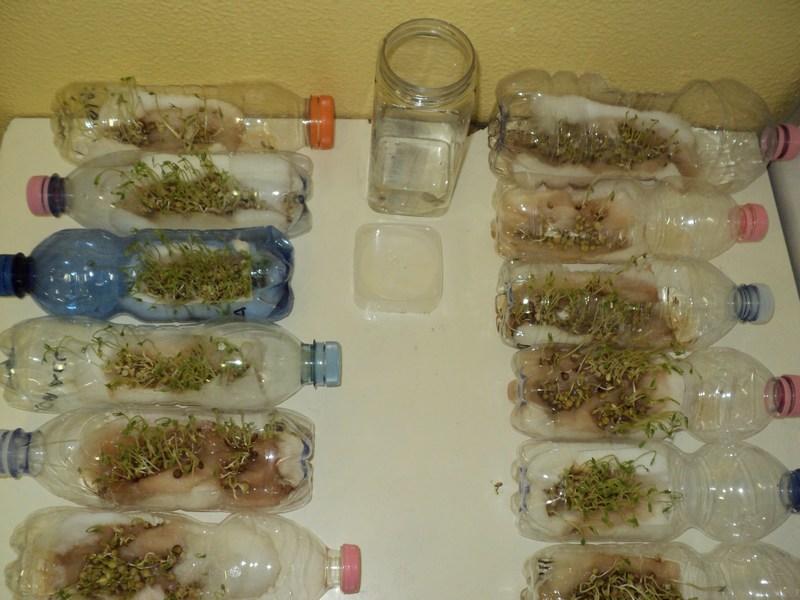 Scienziati for Lenticchie d acqua